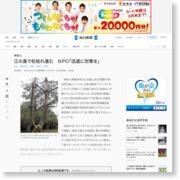 神奈川:江の島で松枯れ進む NPO「迅速に対策を」 – 毎日新聞 – 毎日新聞